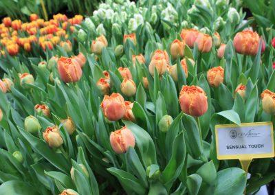 Tulip Trade Event 2017