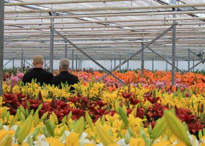 Dutch Lily Days 2018