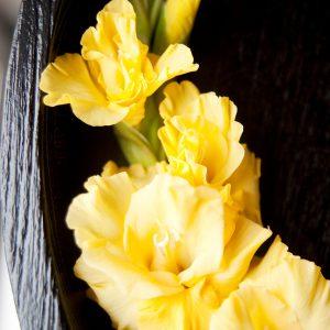 Beautiful yellow gladiolus 'Bananarama'