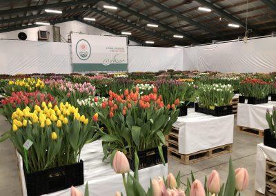 Tulip Trade Event 2020