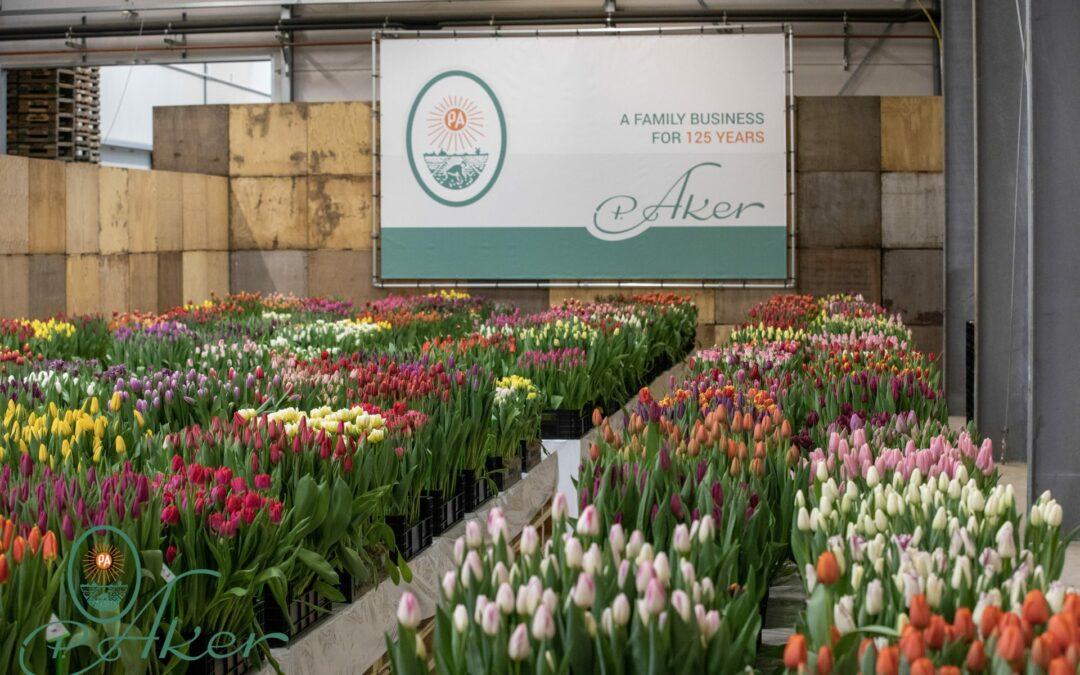 Tulip Trade Event 2021
